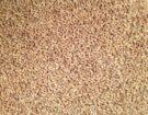 barley_hulled_ps_3